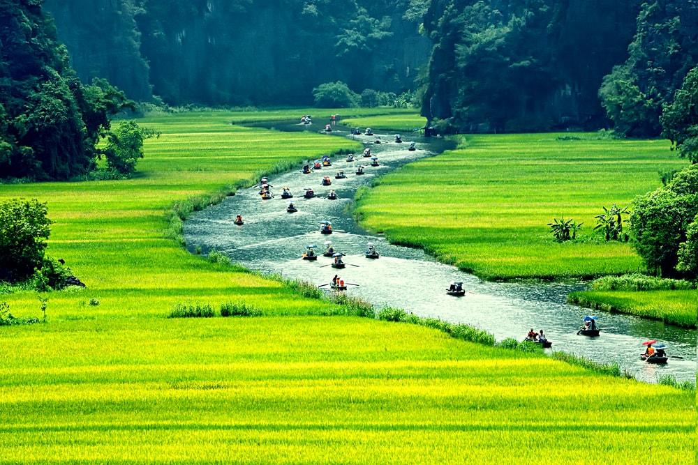 du lịch Ninh Bình ngắm ruộng lúa chín